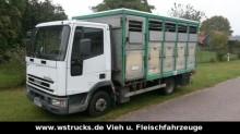 camion van per trasporto di cavalli Iveco