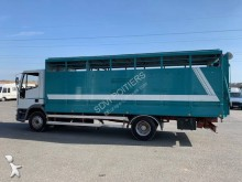 camion transport bovine Iveco