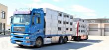 Voir les photos Camion remorque MAN 26.440 XXL + Michieletto Do Przewozu Zwierząt / niska cena